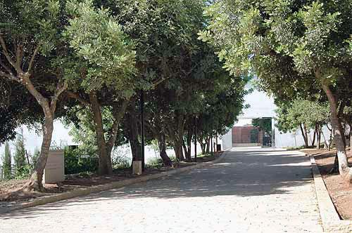 View of the Avenue of the Righteous after renewal