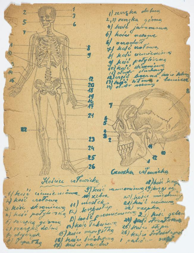 Drawings copied from an anatomy textbook by young Kuba (Jack) Jaget while in hiding