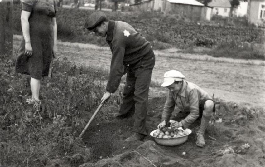 Children harvesting vegetables in one of the public areas in the Kovno Ghetto, Lithuania, September 1943