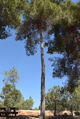 The tree in honor of René and Hélène Bindel, their son Jean, and Clotilde Pava