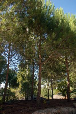 The tree planted in honor of József & Margit Strausz in Yad Vashem