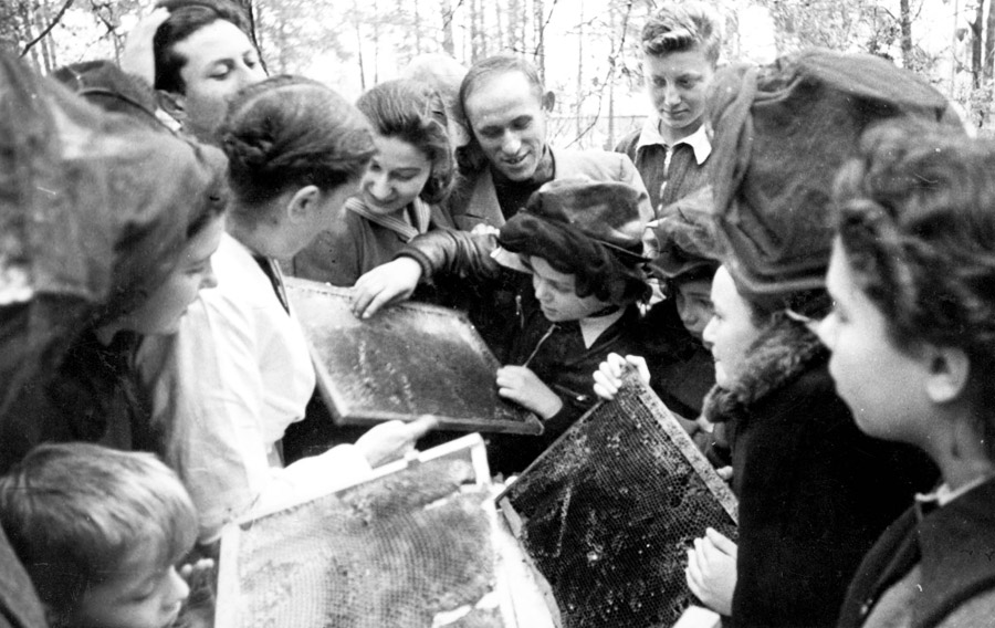 A lesson in beekeeping taught by Dr. Gorecka, a Polish woman whose husband was a member of the Polish Sejm (Parliament)